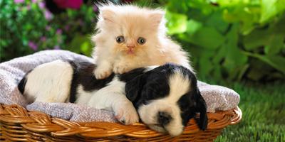 Przyjęcie dla miłośników zwierząt